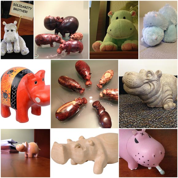 Various pictures of hippos