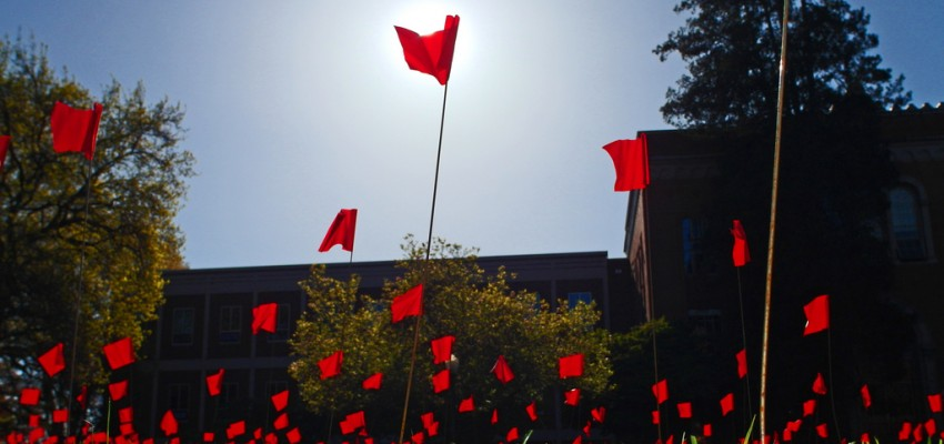 Vivid red flags lit by the sun emerge from the grass