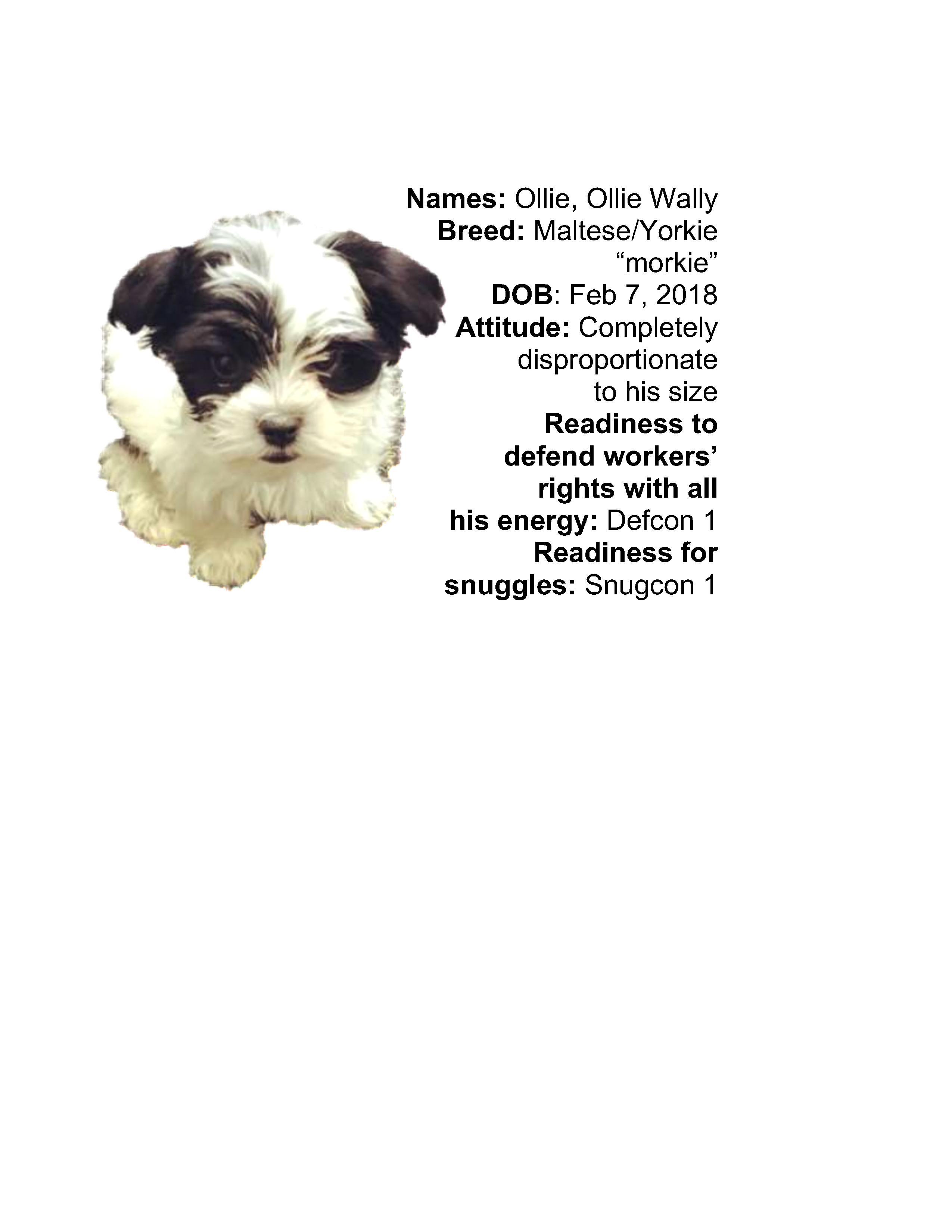 Ollie-slider